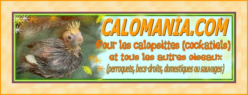 banniére calomania